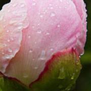 Rain Kissed Poster
