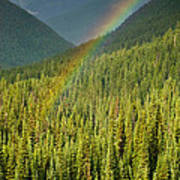 Rainbow And Sunlit Trees Poster