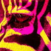 Rainbow Animals - Zebra  Poster