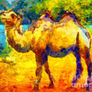 Rainbow Camel Poster