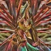 Rainbow Chameleon Poster
