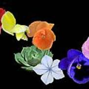 Rainbow Flowers  Poster