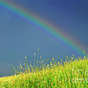 Rainbow Over Pasture Field Poster