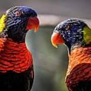 Rainbow Parrot Poster