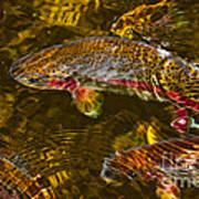Rainbow Trout Poster by Cari Gesch