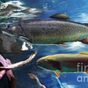 Rainbow Trout Poster by Lisa Redfern