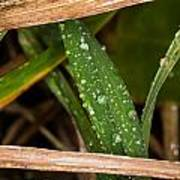 Raindrops In The Grass Poster