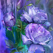 Raindrops On Lavender Roses Poster
