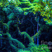 Rainforest In Waimea Valley Poster by Lisa Cortez