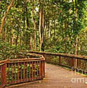Rainforest Walkway Poster