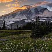 Rainier Meadows Splendor Poster
