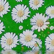 Raining White Flower Power Poster