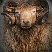 Ram Portrait Poster