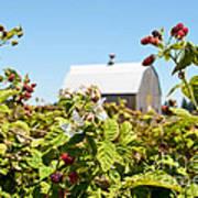 Raspberry Farm Poster