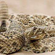 Rattlesnake 1 Poster