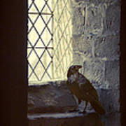 Raven By Window Poster