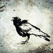 Raven On Blue Poster