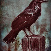 Raven Perched On A Post Poster