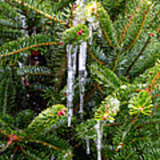 Real Christmas Icicles Poster