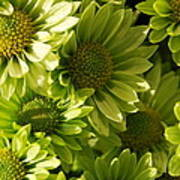 Real Green Flowers Poster