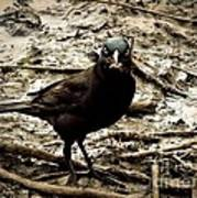 Really It Is Mine- Says The Grackle Bird Poster