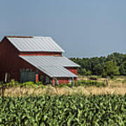 Red Amish Barn And Corn Fields Poster