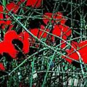 Red An Black Poppies 1 Poster