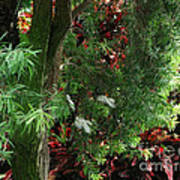 Red And Green Foliage Poster