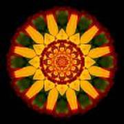 Red And Yellow Marigold V Flower Mandala Poster