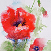 Red Anemones Poster