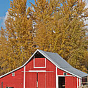 Red Barn And Fall Colors Poster