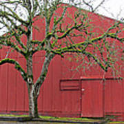 Red Barn And Green Tree In Dundee Hills Oregon Wine Country Poster