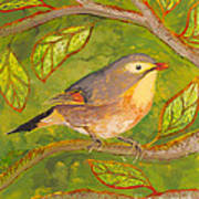 Red-billed Leiothrix Poster