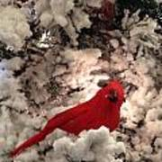Red Bird In A Snow Covered Tree Poster