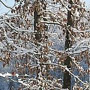Red Bird On Snow Covered Limb Poster