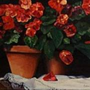 Red Bloom In Terracotta Poster