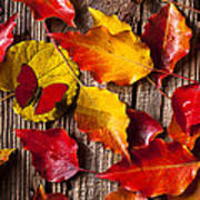 Red Butterfly In Autumn Leaves Poster