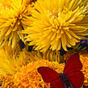 Red Butterfly On African Marigold Poster