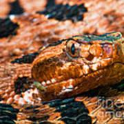 Red Carolina Pygmy Rattlesnake Poster