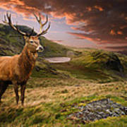 Red Deer Stag And Mopuntains Poster