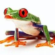 Red-eye Tree Frog 1 Poster