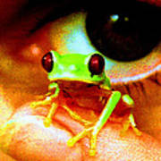 Red Eyed Australian Tree Frog  Poster