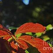 Red Fall Leaves Close Up Poster