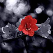 Red Flower Petals Poster