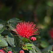 Red Flower Spraying Poster