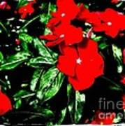 Red Flowers Among Green Leaves Poster