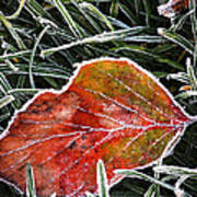 Red Frosty Leaf On Frozen Ground Poster