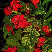 Red Geranium Line Art Poster