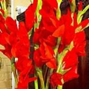 Red Glads Blooming Poster
