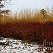 Red Gold Hedge Poster